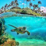 Turtoise swimming in Seychelles sea