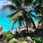 Seychelle palm trees